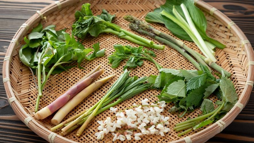 【夕食】春には地元の新鮮な山菜料理をお召し上がりください