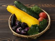 【山形の伝統野菜】おかひじきやうこぎ、雪菜など伝統野菜が登場することも