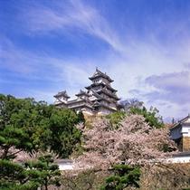 姫路城:桜