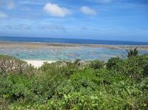 美しい珊瑚礁