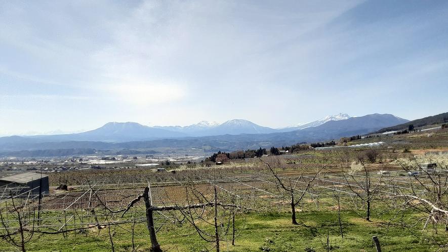 信州の葡萄棚。寒暖差が20℃ある日もあり、美味しいフルーツには、この寒暖差が必要です。