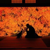 【安国寺ドウダンツツジ】11月初旬に見頃を迎え、額縁に入った絵画ような絶景(当館より車で約55分)