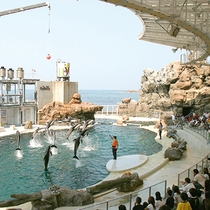 【城崎マリンワールド】イルカ・アシカショーが人気の体験型水族館(当館より車で約55分)