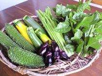 ご希望の方には 新鮮なお野菜プレゼント。