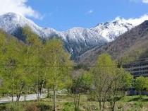 春の観岳からの景色。焼岳の雪山の白と、新緑の木々の緑が爽やかです!散歩に出かけてみませんか?