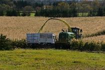 畑での収穫風景