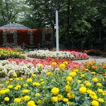 宮澤賢治設計の日時計花壇は、年に2回、草花を植え替えしています