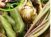 自家栽培の野菜