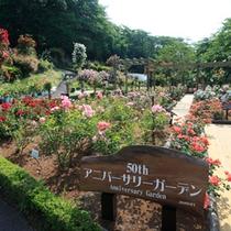 【バラ園】おかげ様で開園50周年!(2010年)アニバーサリーガーデンを新設!