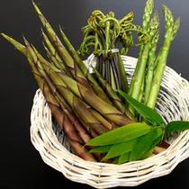 新鮮な山の息吹…山菜をお楽しみ下さい。