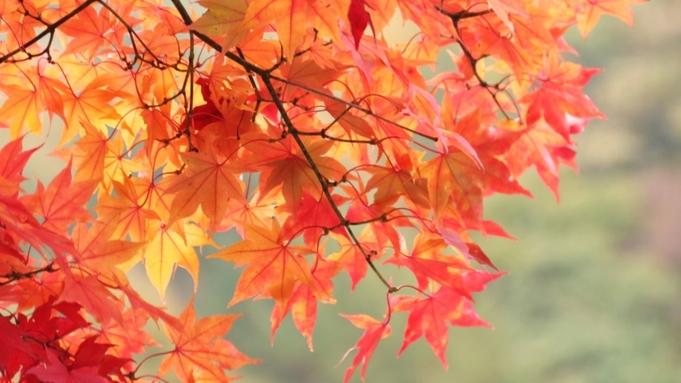 【秋の優雅旅】秋の味覚堪能♪きのこ懐石と24時間入浴OK源泉かけ流し湯☆アーリーイン特典《1泊2食》