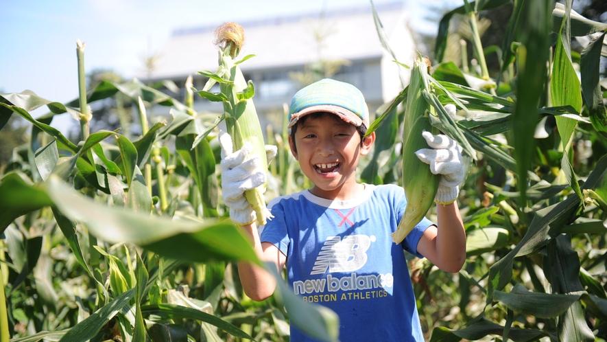 トウモロコシ収穫体験(8月)