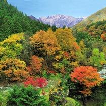 名山「谷川岳」が魅せる四季の美しさ 〜秋〜