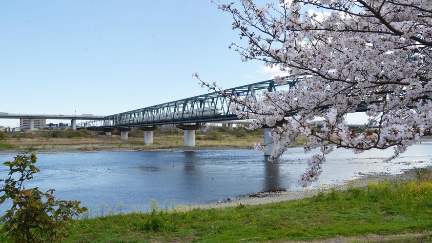 桜の時期はお散歩もおススメです