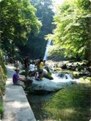 伊豆天城の国立公園浄蓮の滝の清流で鱒アマゴ釣りプラン。