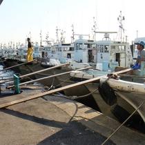豊浜漁港で水揚げされた新鮮な魚を仕入れております!