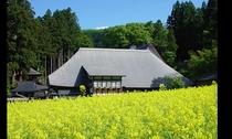 健命寺と菜の花