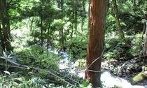 自然がいっぱいの野沢温泉