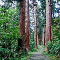 *神杉の回廊