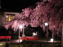 4月、愛宕坂の料亭「離世(はなせ)」の夜桜、一見の価値あり!