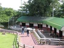 足羽山公園のミニ動物園内の風景
