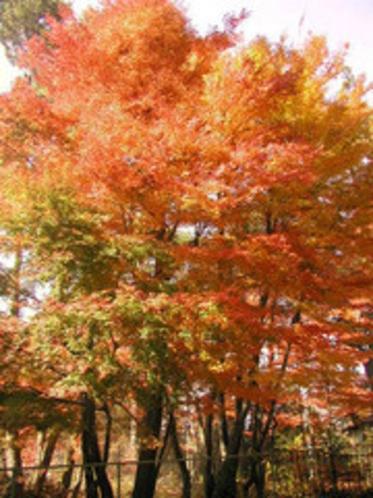 今心亭客室からの紅葉