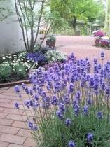 お花に囲まれた中庭