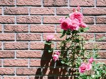 軽井沢の緑とお花に囲まれて♪