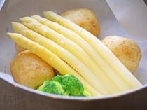 【北海道の恵みを堪能しよう!】栄養たっぷり!ホワイトアスパラ