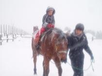 冬の引き馬