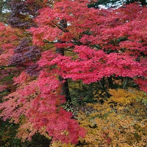 【鐘山の滝 紅葉】