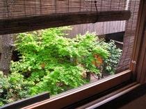 庵 三坊西洞院町町家 2Fから眺めた玄関前の坪庭です。上からみる坪庭の変化も、また楽しみの一つです。