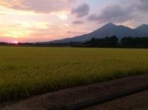 1210 稲刈り前の水田