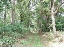 セラピーロード春日の森