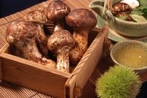 秋の味覚の松茸