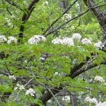 *新緑の季節には高原特有の草木が色づきます。