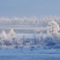 *幻想的な戦場ヶ原の雪景色