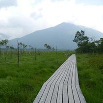 *澄んだ空気の中、戦場ヶ原の新緑を散歩しましょう。