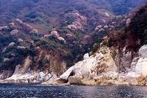 蘇洞門の山桜