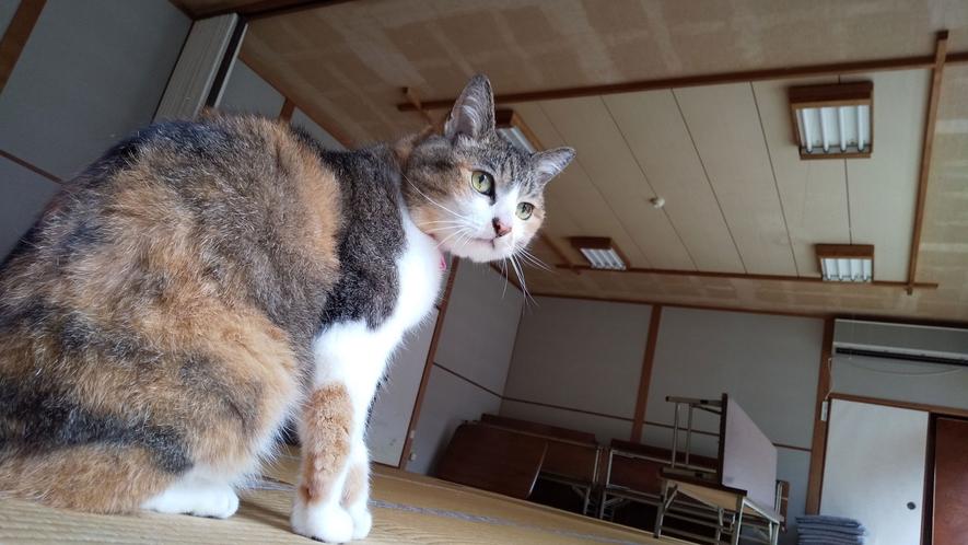 【その他】看板猫のミーちゃん。みんなのアイドルです♪