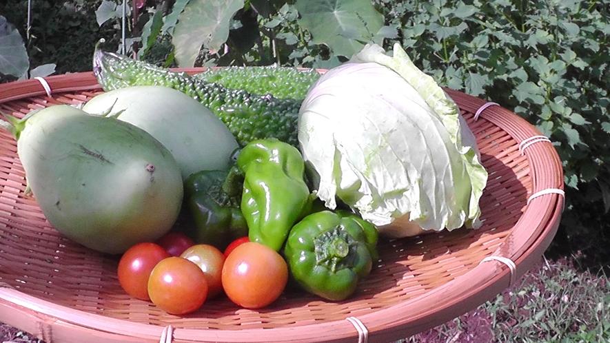 【食事】当館の家庭菜園です。ここで採れた新鮮なお野菜を天ぷらなどでお出ししています。