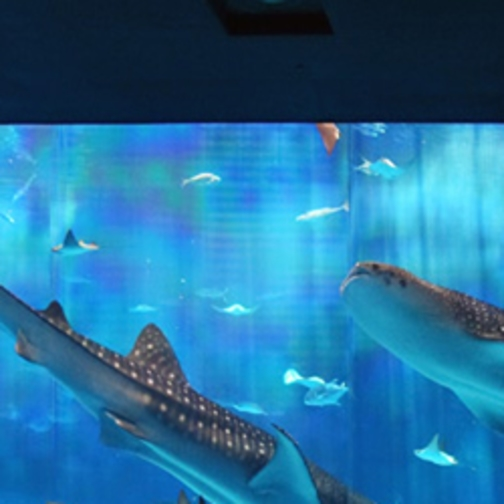 【さき楽28×沖縄美ら海】優雅に泳ぐジンベイザメに大感動!水族館チケット付(朝食つき)