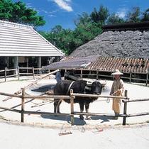 【周辺施設】琉球村内、昔ながらの牛車