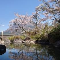 ・露天風呂の景観/春の景観