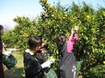 福田農場果物狩り体験(当館より車で約5分)