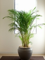客室階・廊下植木
