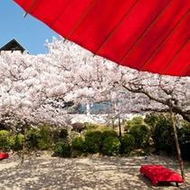春は桜満開のお庭をお楽しみいただけます。