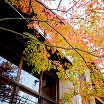 美しく色づいた紅葉をお楽しみ下さい。