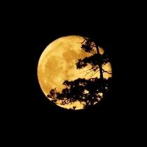 多くの文人墨客に愛され、当館の名称の由来でもある須磨の月。