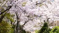*お花見シーズンには当館周辺が見事な桜で満開になります